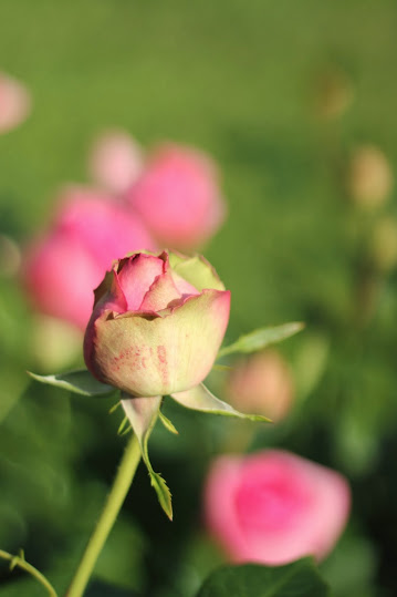 kukan nuppu